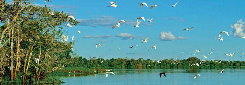 アクア・エクスペディションズ</br>アマゾン川クルーズの空撮動画