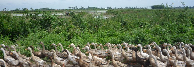 私の職歴⑧ ~カンボジアでの学びの時~