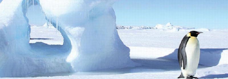 ポナン 南極クルーズに日本人コーディネーター乗船